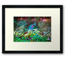 Rainbow Bower... Framed Print