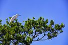 Heron in Tree by njordphoto