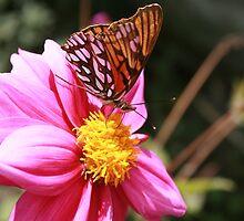 Butterfly on Flower by rhamm