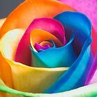 Rainbow Flower by juliagreco