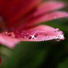 Dewdrops by Liz Worth