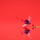 Fuchsia Reflection by George Wheelhouse