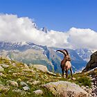 Alpine ibex  by MIRCEA COSTINA