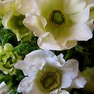 White Anemones by Barbara Wyeth