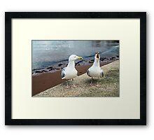 Two Herring Gulls Chatting Framed Print