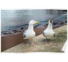 Two Herring Gulls Chatting Poster