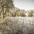 Winter Trees by Tony Shaw