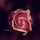 the rose by Ingz