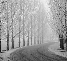 Barren Trees in Winter by Photopa