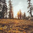Yosemite Sunset by visualspectrum