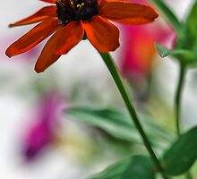 Profusion Orange Zinna with Pink Petunia by T.J. Martin