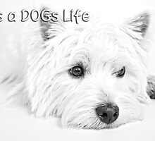 It's a Dog's Life Portrait  by Love Through The Lens