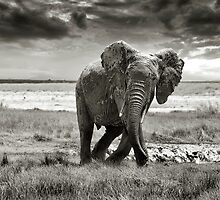 Mud Bath by Steve Langton