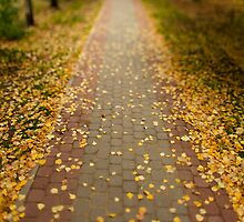 fallen leaves by mrivserg