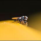 Fly by Helenvandy
