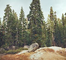 Yosemite Trees by visualspectrum