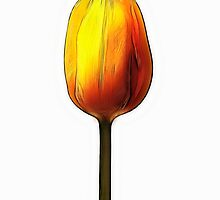 Yellow and orange tulip by sc-images