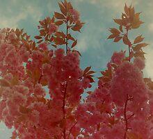 Cherry Blossom. by Elephantman