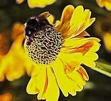 Bee on a flower by recklessrocker