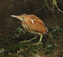 Tiny wonders of the marsh by Heather King