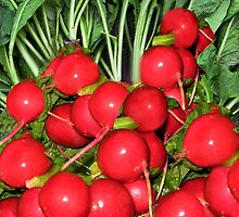 "。◕‿◕。 RADISH (RAPHANUS SATIVUS) RAPHANUS MEANS ""QUICKLY APPEARING"" 。◕‿◕。 by ✿✿ Bonita ✿✿ ђєℓℓσ"