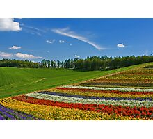 Flower Hill Photographic Print
