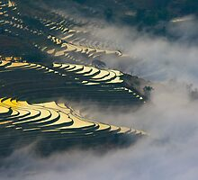 Terraced rice field by jasonksleung