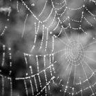 Frozen Spiderweb by Alexandra Vaughan