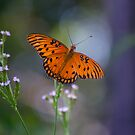 Monarch Butterfly  by anchorsofhope