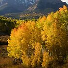 Colorado Fall by Eivor Kuchta