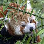 Crazy about bamboo by TheaDaams