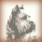 Miniature Schnauzer by Mickey Harkins