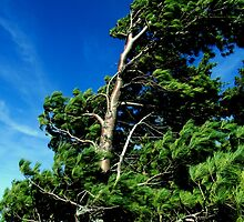 Wind Blown & Beautiful by Kathleen Daley