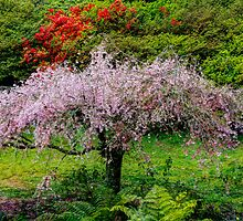 Blossom Tree. by Bette Devine