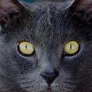 Cats Eyes by Loree McComb