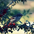 Bird In Berries by Susannah Kotyk
