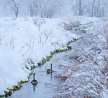 Winter Geese by Photopa