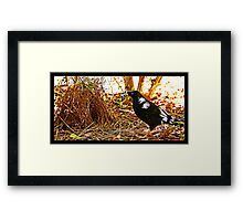 SOMETHING BLUE !! Framed Print