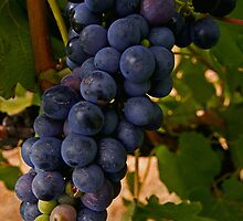 purple grapes  by Elliot62