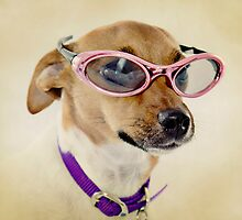 Fabulous Sunglasses Dog on Dusty Cream Background by CptnLucky
