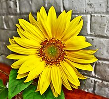 Sunflower and Wall by EBArt