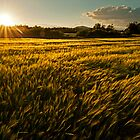 Wheat field at golden sunset by LexiTheMonster