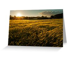 Wheat field at golden sunset Greeting Card
