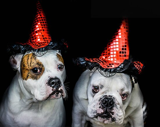 halloween dog witches by ARIANA1985