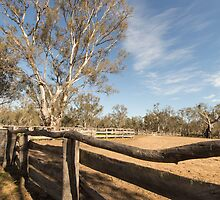 The yards at Barmah by Linda Lees