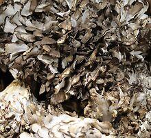 Mushrooms by corrado