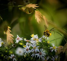 Good Stuff for the Bee by Rob Heber