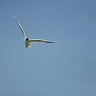 Free As A Bird by David King