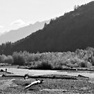 Vedder River by Tracy Friesen