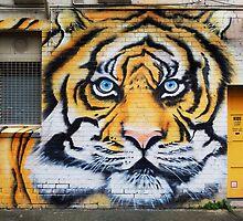 Tiger Graffiti, Abbotsford by Roz McQuillan